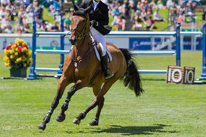 Equestrian show jumping horse