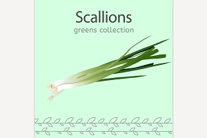 Vector Scallions Image