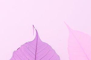 Dry leaves purple. Vertical flat lay
