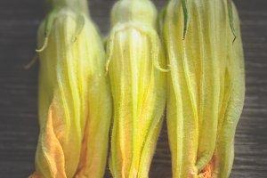 Close-up of pumpkin flowers