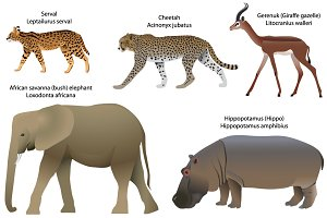 Animals of Africa
