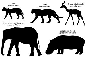 Silhouettes of animals of Africa