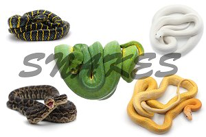 Set of 25 photos of snakes on white