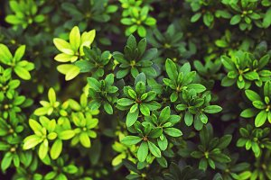 Green and yellow bush leaves