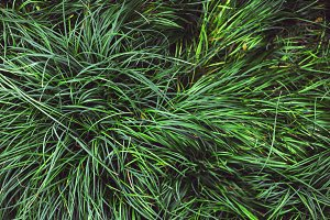 Background of green mashed grass