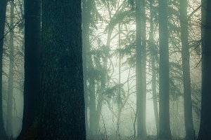 Foggy early morning in the forest