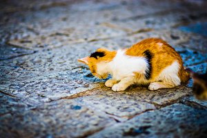 A cute cat is played on asphalt