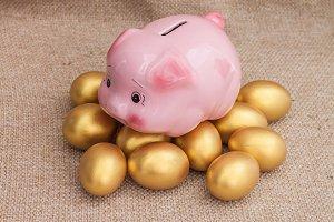 Pink piggy bank on golden egg