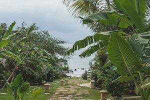 Tropical landscape. Bali island, Indonesia.