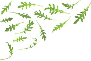 rucola or arugula leaf isolated on white background with copy space for your text. . Top view. Flat lay pattern