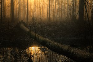 Foggy sunny morning in the forest