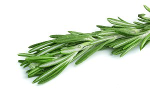 Fresh green rosemary isolated on a white background. Top view