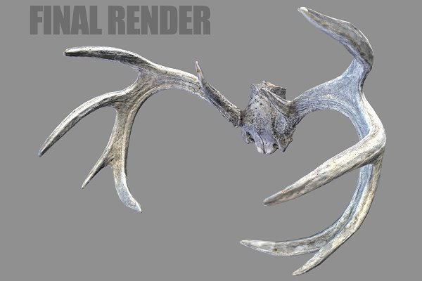 Animal: Beatheart Creative Studio - Deer Horns