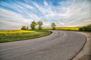 empty asphalt road and floral field