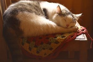 country cat sleeping in cottage house on knitted tissue