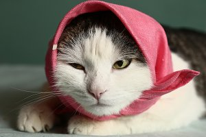 cat in headscarf pink shawl close  up portrait