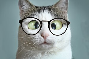 cute cat in myopia glasses squinting close up funny portrait