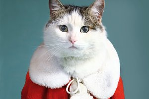 cool tom cat in santa claus garment mantel