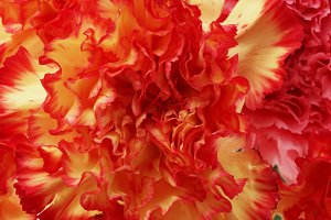 Red flower petals. Nature background