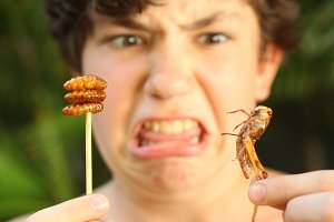 boy with disgust grimace hold strange thai food silkworm and grasshopper