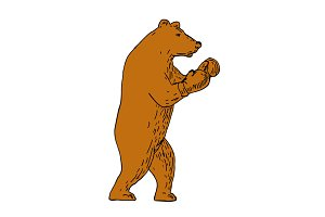 Brown Bear Boxing Stance Drawing