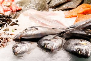 Fresh dorade fish market Barcelona