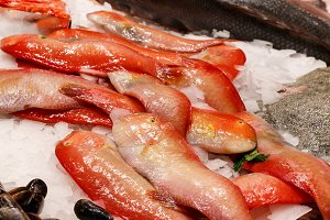 Fresh red fish in market Barcelona