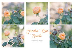 Garden Rose Bundle - Stock Photos