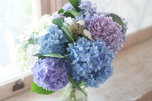 Blue and purple flowers 2