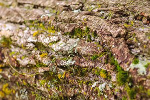 Wooden texture of tree bark and moss