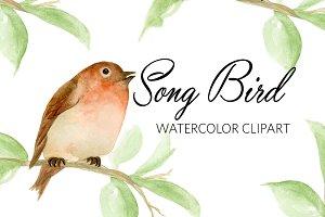Watercolor Song BIrd Clipart