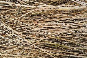 Dry Weed Stalks