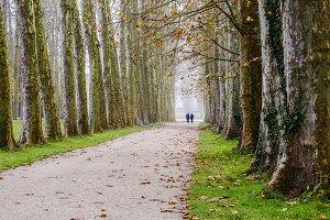 Autumn Romance in Versailles