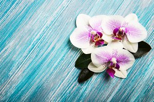 Orchid on a old wood