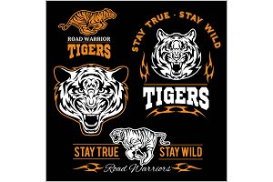 Vector set of illustrated tiger themed sport logo, patch, icon, or badge