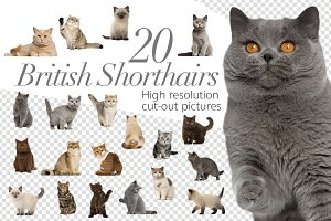 20 British Shorthairs - Cut-out Pics