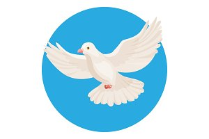 Dove of white color symbol of peace isolated in circle