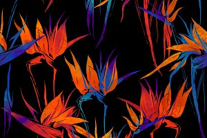 strelitzia flowers seamless | JPEG
