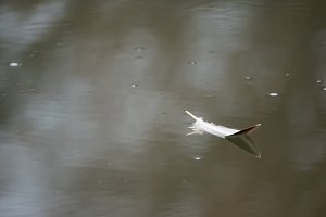 bird quill on the water surface