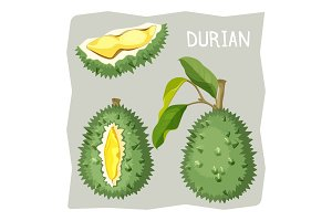 Durian fruit in sharp cracked skin with piece of branch