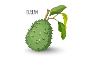 Exotic durian in sharp closed skin with leaves