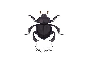 Black dung beetle that has strong unpleasant smell
