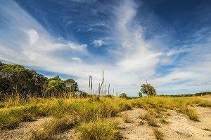 Outback Australia in Summer
