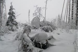 Forest in winter with snow