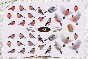 ♥ vector Bullfinches SET