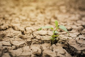 Little green plant on dry ground