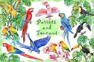 Parrots and Toucans