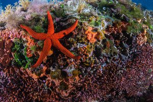 a big red starfish