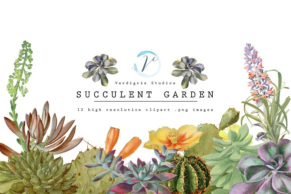 Vintage Succulent and Cactus Clipart