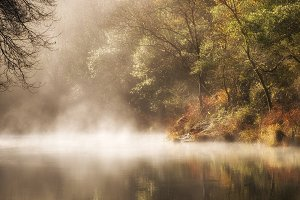 River and mist in the forest